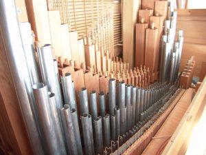 Borsttwerk Robson Organ Kommetjie
